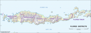 Flores districts