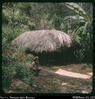 """On way to caves near Giimanda. Woman drying coffee. Mountainside. Western Highlands, PNG.&q..."