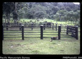 Cattle yards, farm property opposite Tangoa on Santo