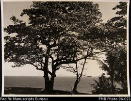View from shore to distant island with big tree in foreground