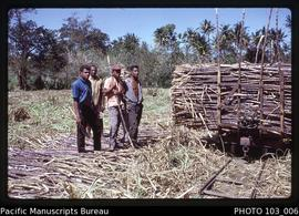 West Viti Levu scenes: Cane harvesting,  Sigatoka district