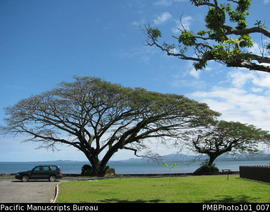 [Suva Trees on coast road]