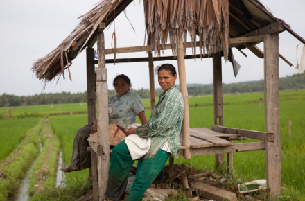 Rice farmers in Aceh