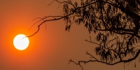the_sun_and_the_sydney_fires_image_by_alex_proimos_from_www.flikr.com